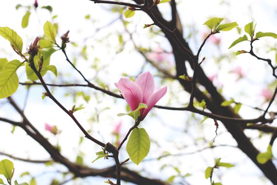 L-bloom_6424