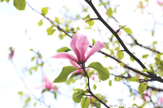L-bloom_6428