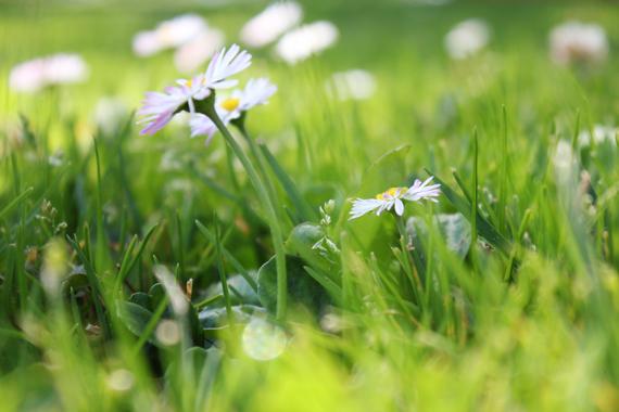 Spring_6723