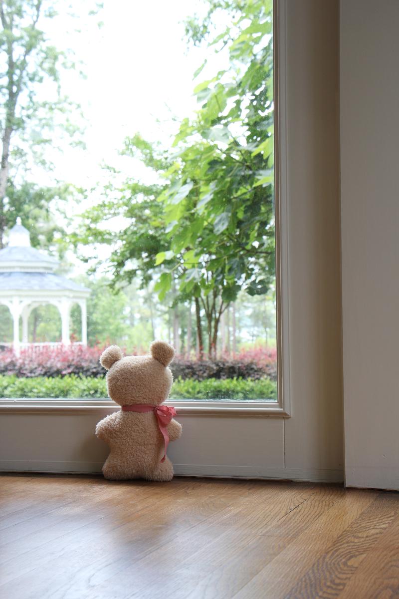 Bear-2020-05-30-13.45.23-blog